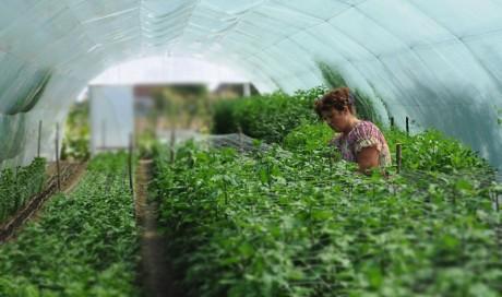 Конкурс за одобравање гаранција за обезбеђење кредита намењених финансирању СТАРТ УП програма радно неактивних жена са територије Аутономне Покрајине Војводине