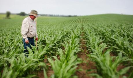 Конкурс за одобравање гаранција за обезбеђење дугорочних кредита за куповину пољопривредног земљишта